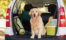 atu tipps für hundefreunde