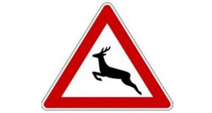 Verkehrszeichen-Wild.jpg